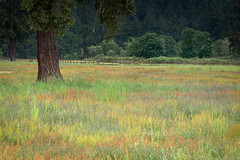 Spring in the Park (llabe) Tags: park trees field washington nikon grasses lakewood d610 springcolors fortsteilacoompark
