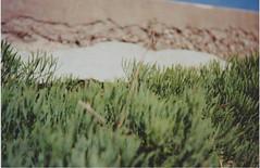 Soft (Sofia Podest) Tags: sea green film 35mm agfa kodak 200iso analog grainy pleasure circeo italy may 2016 spring sofia podest