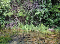Macedonia (Struga-St Naum Spring) Clearness of spring water