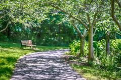 walk through the park (kderricotte) Tags: park bench bokeh depthoffield hbm lightcircles helios44m458mmf2 sonya6000