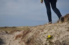 (-Kj.) Tags: flower netherlands grass walking sand weed legs path dunes hike growing schoorl northholland schoorlsduinen
