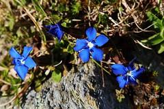 Wild Flower (Hugo von Schreck) Tags: flower macro outdoor blume makro blte tamron28300mmf3563divcpzda010 canoneos5dsr hugovonschreck