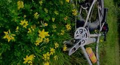 #RothrockStatePark #BrownPA #SassafrasTrail with #MickShort #GreatRide #WorthTheTrip #FatbackBike #TrekFarley #StewartBrosPhotographers (georgestewart1956) Tags: greatride worththetrip rothrockstatepark sassafrastrail fatbackbike brownpa trekfarley mickshort stewartbrosphotographers