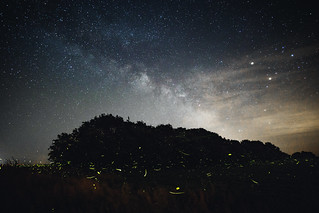 As above, so below - The Milky Way and Fireflies