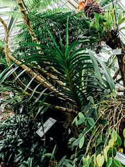 Berlin Botanical Garden (pacia_pma) Tags: plants berlin cacti garden botanical greenhouse tropical subtropical succulents