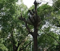 Brown University (Harry Lipson) Tags: brown tree college stone campus artwork university landmark providence treetrunk monolith ivyleague brownuniversity tomahawk workofart harrylipsoniii harrylipson