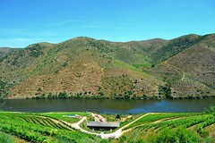 view from above (ekelly80) Tags: portugal june2016 summer vilanovadefozca guarda casadorio quintadovallado wine winecountry dourovalley douroriver beautiful scenery hike trail valley hills mountains river water casa hotel fromabove lookdown green vineyards rows