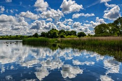 Mirror, mirror on the... (Anthony Plancherel) Tags: travel blue trees summer england reflection green water birds clouds rural swimming canon reflections reeds landscape outside outdoors mirror countryside waves outdoor background wildlife horizon buckinghamshire ducks places bluesky fields balance ripples category depth whiteclouds landscapephotography marsworthreservoir wildfoul canon1585mm canon70d marsworthlake