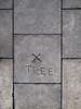 TREE (Daire Quinlan) Tags: dublin tree digital pen olympus panasonic sidewalk f25 14mm epl2