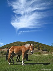 Horses in Nymfaio /    (amalia lam) Tags: nature landscapes meadows environmental center enviroment florina nymfaio nymfeo westmacedonia arktoyros