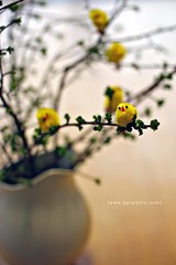 """IT WAS ALMOST AN EASTER TREE"" (Gregoria Gregoriou Crowe) Tags: color chicken easter bokeh gettyimages eastereggs minieggs happyeaster eastertree babychicks eggcup gettyimagesirelandq12012 yahoo:yourpictures=celebrations yahoo:yourpictures=inbloom"