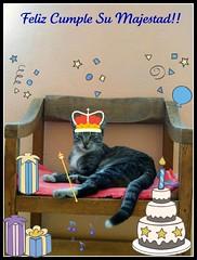 El Cumple de Su Majestad !! (MaPeV) Tags: birthday cats happy chats chat tabby kitty gatos gato neko katze morris gatti gattoni gattini tabbyspoted