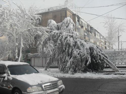 Последствия снегопада в Курган-тюбе (15)