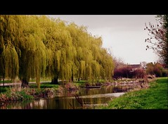 Somewhere on the way home.... (Janna...) Tags: trees scenery lincolnshire willows lincs