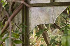Overgrown Window (Ruairidh an Dorcha) Tags: broken window glass overgrown bush decay