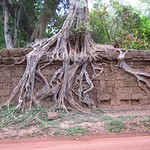 "Tree and Wall <a style=""margin-left:10px; font-size:0.8em;"" href=""http://www.flickr.com/photos/14315427@N00/7113116489/"" target=""_blank"">@flickr</a>"