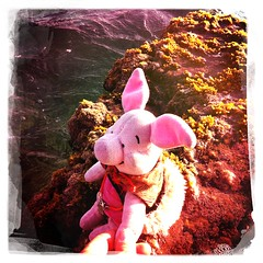 Ferkel at the Beach.