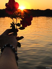 Holding Flowers Into The Sunset-Kellie Hastings (Creative illusions-Nature Photography-Kellie H) Tags: sunsetflower flowersilouette requesttolicense exclusiveandnonexclusivelicenseavailabe