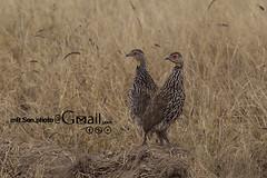 /Amboseli National Park (mR.Son.Photo) Tags: africa safari amboseli  amboselinationalpark   republicofkenya