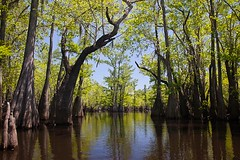 _MG_8674.jpg (David Moynahan) Tags: usa creek forest unitedstates florida forests creeks stateforest apalachicolanationalforest stateforests wakullacounty biggullycreek
