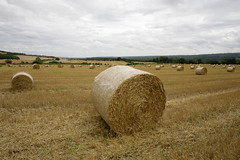 HAY ROLLS KENT (Adam Swaine) Tags: county uk england sky english beautiful yellow rural canon landscape countryside kent britain east fields hay hayrolls 1740mm 2012 counties naturelovers kentweald adamswaine mostbeautifulpicturesmbppictures wwwadamswainecouk kentishlandscapes