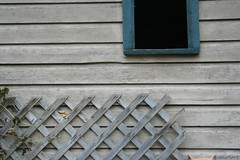 Barn © (Blackcatatheart) Tags: old autumn horse building green fall texture window barn fence sill head farm rustic vine bean symmetry ornament figurines ornaments owl balance figurine stable sparse
