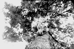 2012-10-10 RVG_8784 pos ASBP f226Tree (Ralph on and off) Tags: longexposure 120 photoshop aperture pinhole negative 25 asa agfa negatives photographing lightroom diafragma agfasynchrobox synchrobox adox sb900 nikond300 photographingnegatives