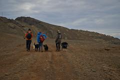 4mai_Thorbjorn_023 (Stefn H. Kristinsson) Tags: dog mountain dogs iceland spring hiking may ma vor hundur sland ganga fjallganga tamron2875mm grindavk hundar grindavik orbjrn nikond800 thornbjorn orbjarnarfell