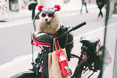 ready for a ride (ken_tsuda) Tags: street uk dog pet animal bicycle japan tokyo nikon ride style gb roppongi 810 kentsuda 20160228hbreenhaircut5450