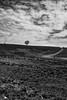 _DSF0879-Edit (richwself) Tags: uk mountain tree wales clouds blackwhite sheep unitedkingdom path senghenydd countyboroughofcaerphilly fujinonxf1024mmf4rois fujifilmxpro2