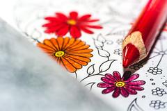 coloring book (spiterek) Tags: red white macro colors book coloring crayon piotrszczepankiewicz craynos