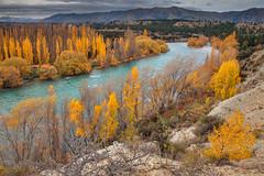 Clutha River || SOUTH ISLAND || NZ (rhyspope) Tags: new autumn pope mountains color colour tree fall canon river landscape island poplar south rocky zealand nz 5d wanaka rhys mkii clutha rhyspope
