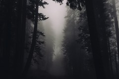 #PicOfTheDay Dark Forest (Candidman) Tags: trees cold nature fog forest dark haze