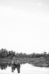 DSC02479 (AaronJKelley) Tags: blackandwhite white black landscape sony minimal swamp a6000