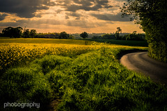 Fields of Gold (Alex Chilli) Tags: road uk sunset england green field clouds landscape gold countryside spring quiet fuji silent view britain outdoor may peaceful scene surrey xa2 fields serene winding caterham coulsdon chaldon 2016