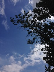 May 14, 2016 2:27pm (seriouscatlady) Tags: blue trees sky tree nature weather clouds spring afternoon wind natur himmel wolken windy sunny bluesky blau graz ste sonnig bume baum blauerhimmel wetter frhling iphone wolkig nachmittag windig iphoneography
