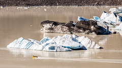 Tiny Boat (djryan78) Tags: travel autumn newzealand lake fall ice water canon boat nationalpark outdoor canterbury mackenzie southisland iceberg dslr 70200 6d tasmanlake 70200f4l aorakimtcook aorakimtcooknationalpark canon6d