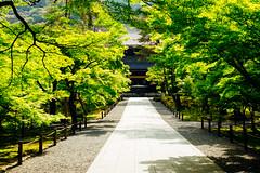 (sunnywinds*) Tags: leica summer green kyoto fresh  nanzenji   aposummicronm1250asph