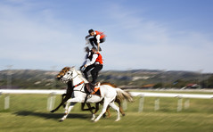 Cavalcata 2016 (MirTheDog) Tags: sardegna sardinia cavalli costumi 2016 tradizioni cavalieri cavalcata pariglie cerdegna