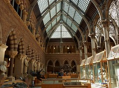 The Church of Paleontology (mikecogh) Tags: architecture skeleton gothic columns arches oxford cabinets pittriversmuseum