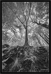 Voigtlander Heliar-Hyper Wide 10mm f/5.6 Aspherical on Sony A7R IR(720nm) (Dierk Topp) Tags: bw sony infrared sw reinfeld 720nm herrenteich voigtlanderheliarhyperwide10mmf56aspherical