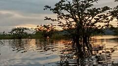 Impressionism amazonico (david.almazul) Tags: amazonas cuyaveno atardecer sunset river impressionism impresionistas