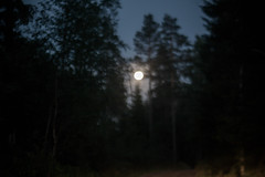 (Frida J) Tags: moon night evening sky summer forest trees woods sweden vrmland