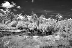 Marsh Gulf State Park (Howell Weathers) Tags: trees blackandwhite nature water monochrome clouds ir outdoor alabama infrared marsh gulfstatepark