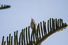IMG_6936L4 (Sharad Medhavi) Tags: bird canonef100400mmf4556lisusm canoneod50d birdsandbeesoflakeshorehomes