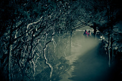 Into The Abyss (Hans Maso) Tags: trees nepal winter people mountain man cold men rock trekking canon rocks candid dust ef2470mmf28lusm trekker 2470mm 50d canoneos50d