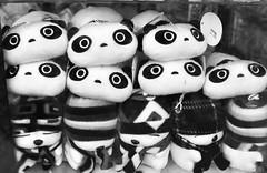 These Eyes (sniderscion) Tags: bw white toronto ontario canada black cute window retail scott toy big stuffed eyes nikon panda display g bears wide canadian plush nikkor 18200 snider appealing 3556 sniderscion d7000 nikkor182003556g