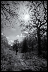 Into the sun..... (Nathan Reading) Tags: canon clent sigma1020mm canon50d uffmoorwood