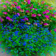 A Hill side of color. (Omygodtom) Tags: blue wild flower nature oregon lens nikon hill pdx 18105 d7000