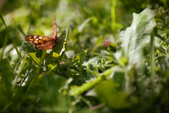 Back to the nature (Luca Pisanu) Tags: life light sky italy sun blur verde home nature grass animal silhouette clouds composition canon butterfly flying day colours dof purple erba 5d transparent fiori farfalla freen dlsr littel mark2